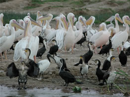 Birding along the Kazinga Channel